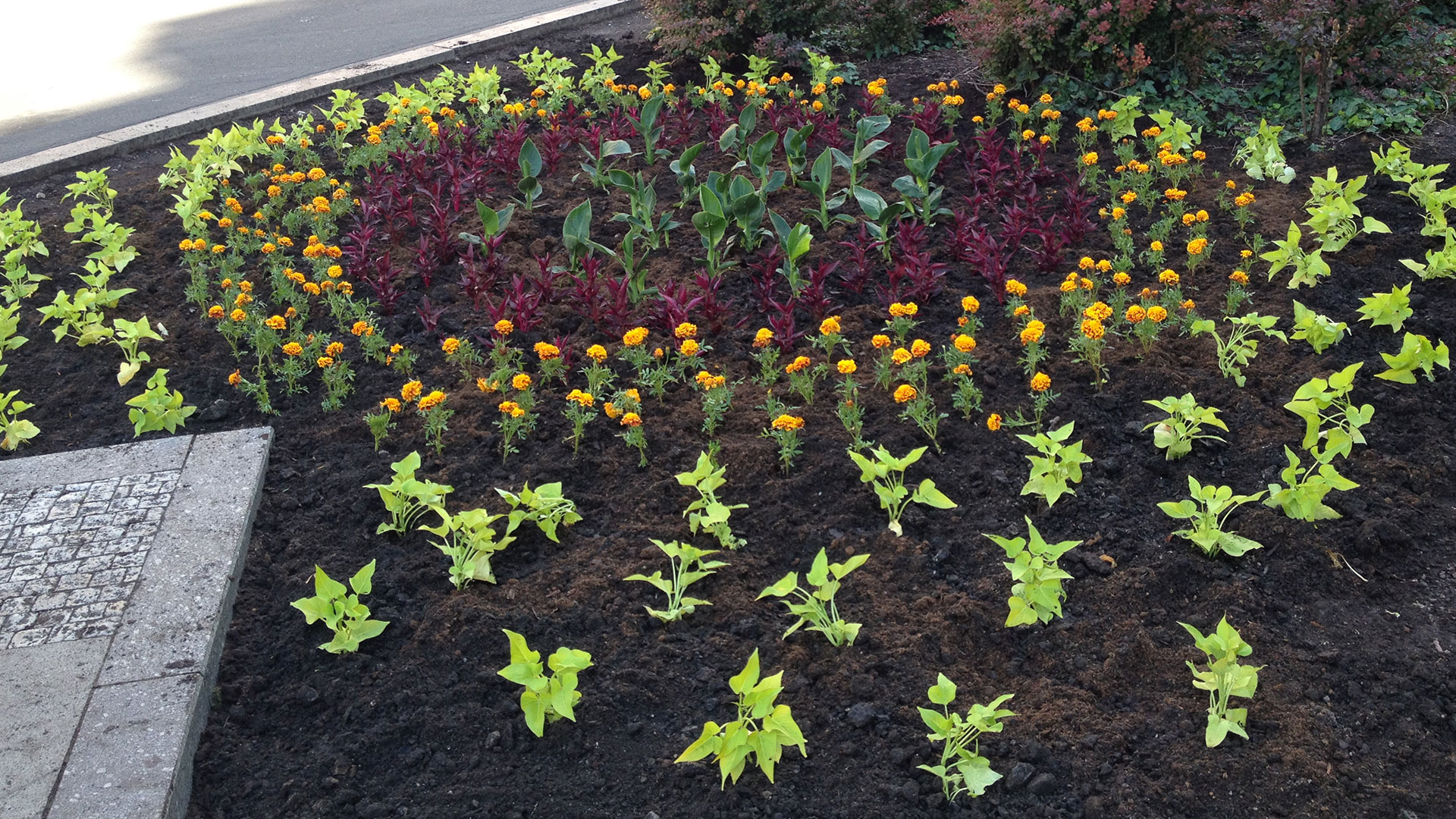 PLANTING FLOWERS ON WENCESLAS SQUARE